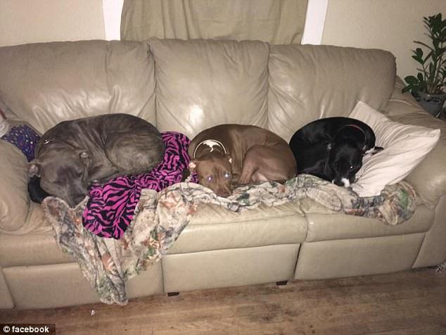 Chỉ 5 phút ở một mình cùng 3 con chó pit bull, bé gái 3 tuần tuổi bị cắn đến chết - Ảnh 3.