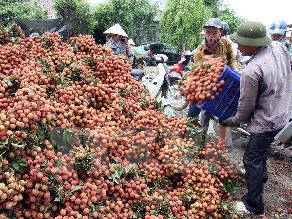 Quả xoài 1,7 triệu, vải thiều 400 ngàn/12 quả: Xót lòng dân Việt 3