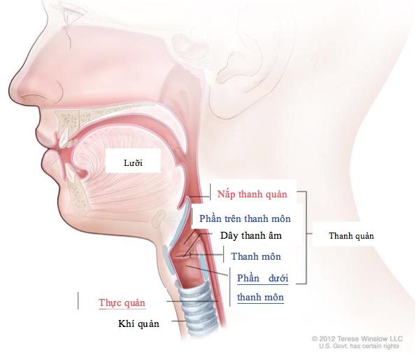 Người đàn ông không nói chuyện được mỗi sáng vì hóc răng giả suốt hai năm - Ảnh 3.