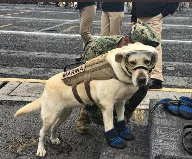 Cô chó được Tổng thống Mexico vinh danh sau khi cứu sống 52 người trong trận động đất khủng khiếp - Ảnh 3.