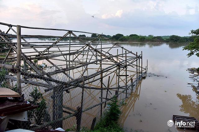 Người trồng quất méo mặt vì nước sông Hồng dâng cao - Ảnh 3.