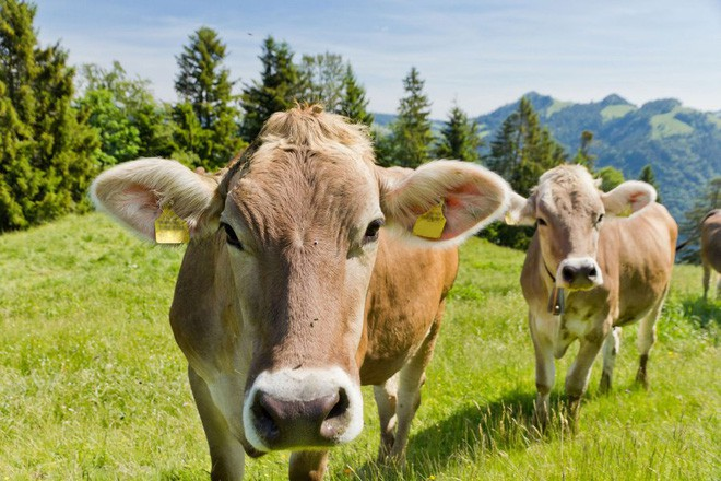 Những loài động vật tưởng tầm thường nhưng có sức mạnh thay đổi cả thế giới - Ảnh 3.