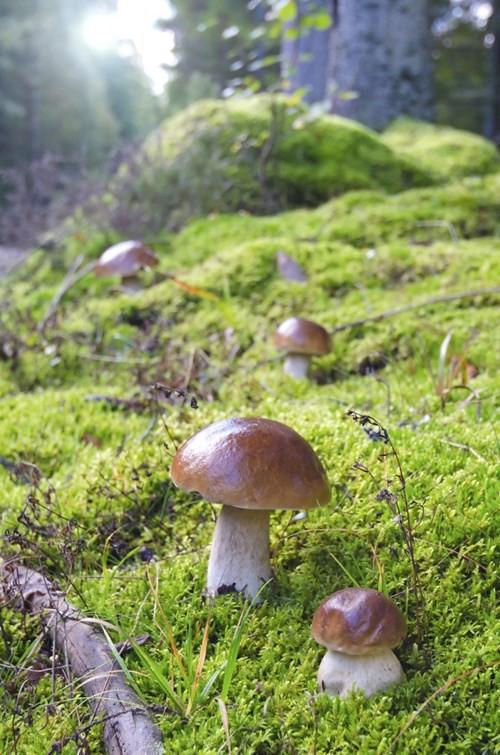Nấm - loài duy nhất bảo vệ Trái đất trước rác thải rắn độc hại - Ảnh 3.