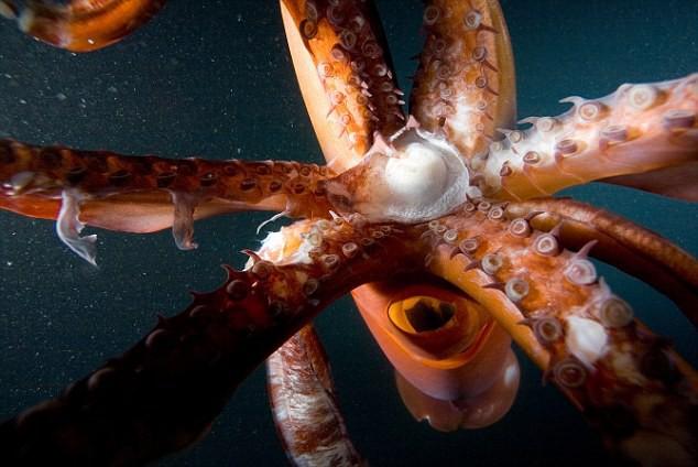 Giải mã câu chuyện người phụ nữ ngậm nguyên một đàn bạch tuộc con chỉ sau vài ngày ăn bạch tuộc sống - Ảnh 3.