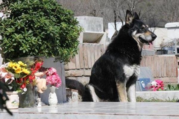 Những mẩu chuyện về chú chó trung thành khiến bạn phải bật khóc - Ảnh 13.
