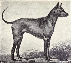 Việt Nam đang sở hữu một trong những loài chó hiếm và đắt nhất trên thế giới mà không ai biết - Ảnh 4.
