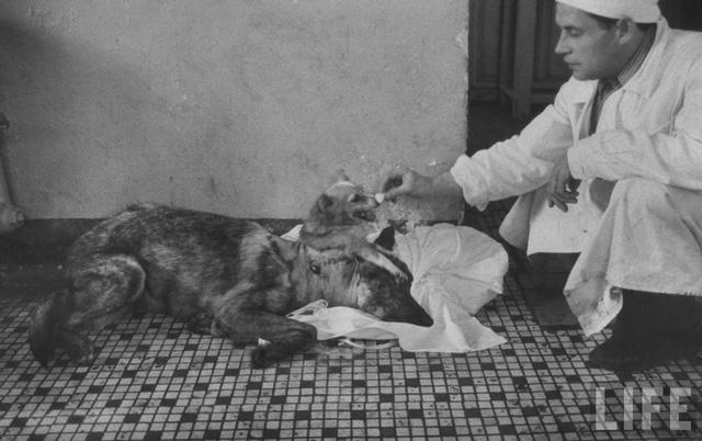 Chuyện hoàn toàn có thật: Các nhà khoa học Nga tạo ra một con chó hai đầu từ 2 giống khác nhau - Ảnh 6.