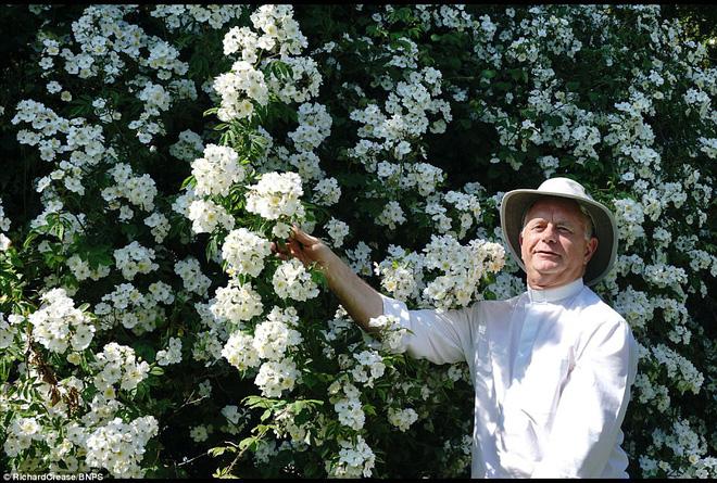Chiêm ngưỡng cây hoa hồng trắng vĩ đại tồn tại suốt hơn trăm năm - Ảnh 4.