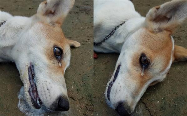 Những mẩu chuyện về chú chó trung thành khiến bạn phải bật khóc - Ảnh 2.