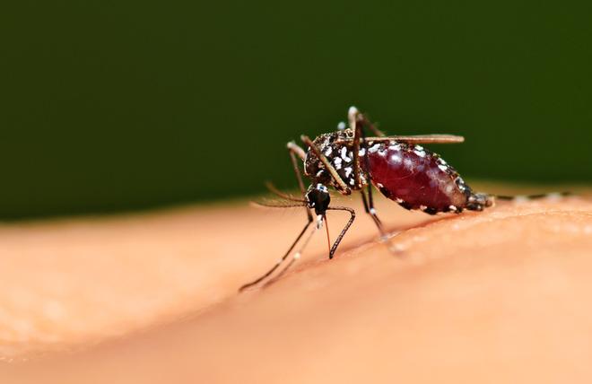 Sốt xuất huyết ngày càng gia tăng, đừng chủ quan với những biến chứng đáng sợ của bệnh này - ảnh 3