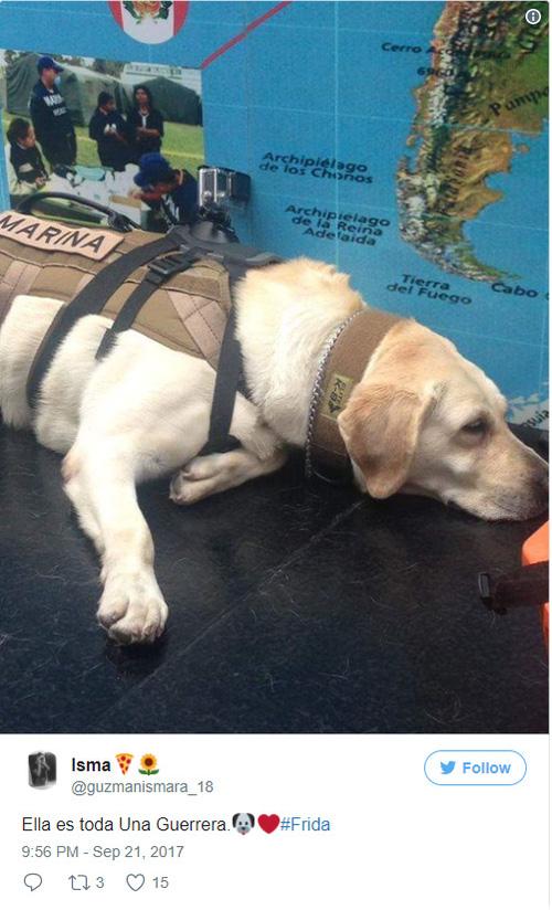 Cô chó được Tổng thống Mexico vinh danh sau khi cứu sống 52 người trong trận động đất khủng khiếp - Ảnh 4.