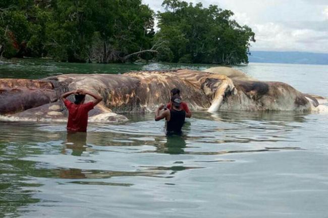 Những sinh vật bí ẩn to như quái vật thời tiền sử dạt vào bờ biển - Ảnh 3.