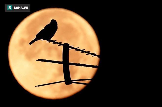 Đừng bỏ lỡ: Siêu trăng cuối cùng của năm 2017 sẽ xuất hiện vào tối Chủ nhật này - Ảnh 2.