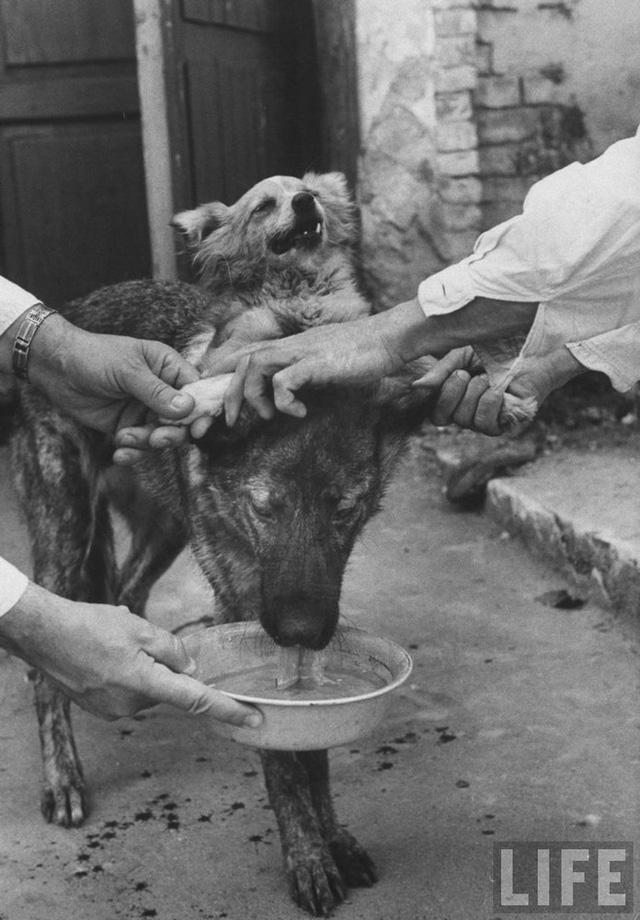 Chuyện hoàn toàn có thật: Các nhà khoa học Nga tạo ra một con chó hai đầu từ 2 giống khác nhau - Ảnh 7.
