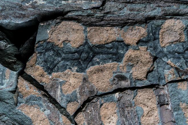 Phát hiện một hóa thạch khủng long được bảo quản đặc biệt tốt ở Alberta, trông giống hệt như đang còn sống - Ảnh 5.