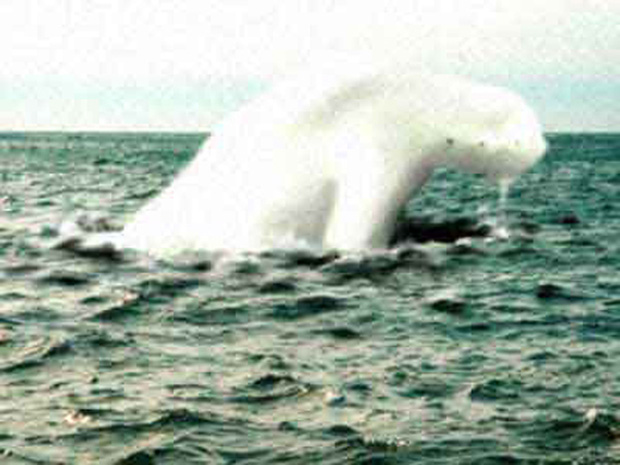 Bí ẩn chưa được giải đáp về quái vật biển khổng lồ hình người tại Nam Cực - Ảnh 4.