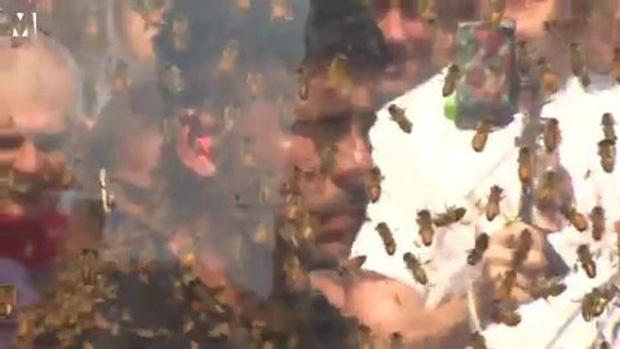 Người đàn ông để cho 100 nghìn con ong bâu kín mặt mà vẫn không sao - Ảnh 6.