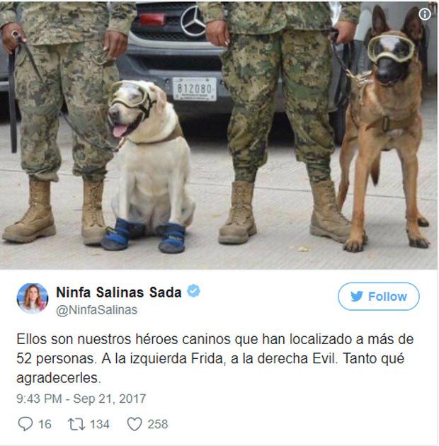 Cô chó được Tổng thống Mexico vinh danh sau khi cứu sống 52 người trong trận động đất khủng khiếp - Ảnh 5.