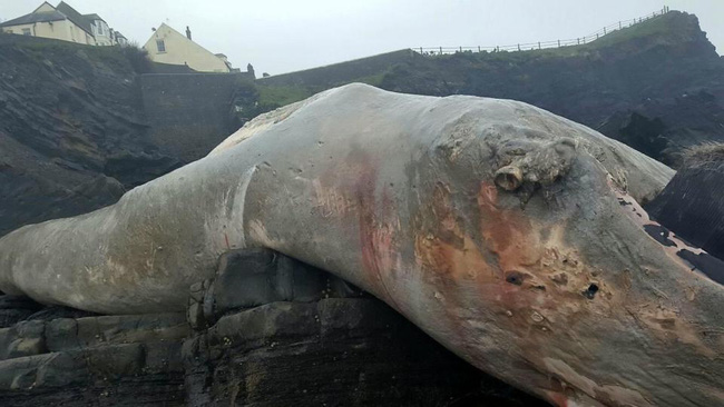 Những sinh vật bí ẩn to như quái vật thời tiền sử dạt vào bờ biển - Ảnh 4.