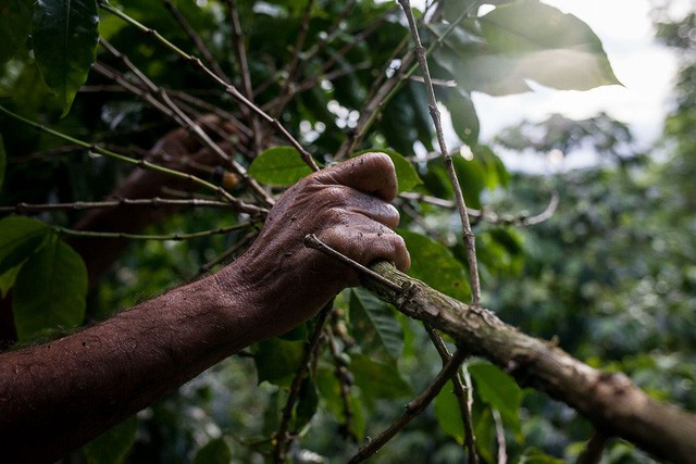 Những cánh đồng hoang hóa tiêu điều vì khủng hoảng kinh tế ở Venezuela  - Ảnh 5.