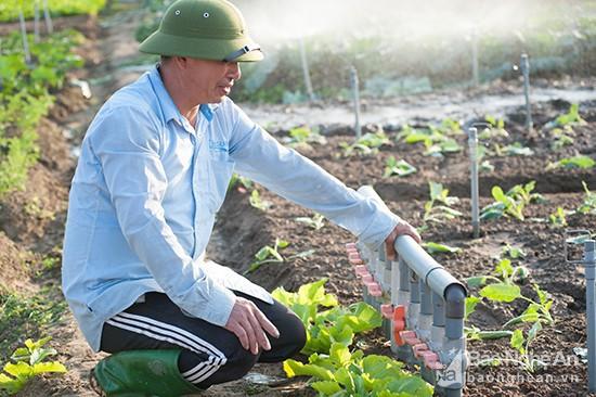 Làng rau khủng nhất xứ Nghệ ngày cuối năm đẹp rực rỡ - Ảnh 5.