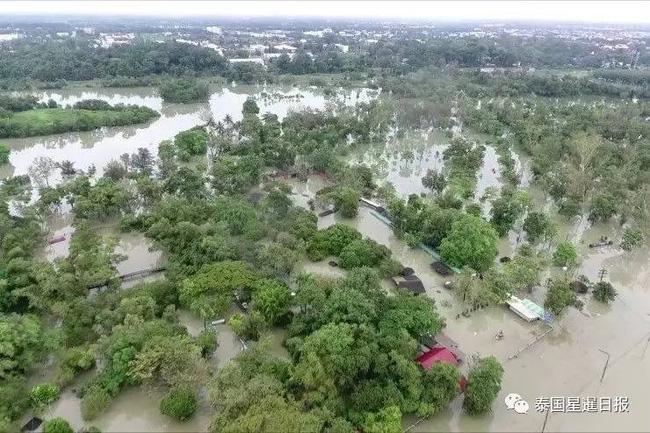 Thái Lan: Mặc kệ mưa lũ, người dân vô tư xẻ thịt cá sấu sổng chuồng giữa dòng nước - Ảnh 6.