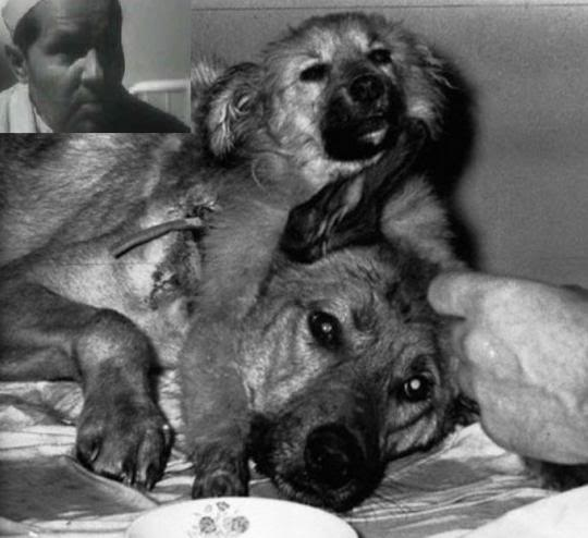 Chuyện hoàn toàn có thật: Các nhà khoa học Nga tạo ra một con chó hai đầu từ 2 giống khác nhau - Ảnh 8.