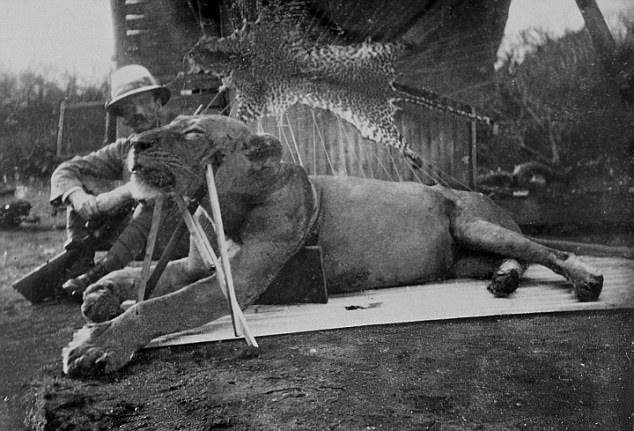 Khoa học đã giải mã được bí ẩn cuồng sát của cặp quái thú ăn thịt người Tsavo năm 1898 - ảnh 4