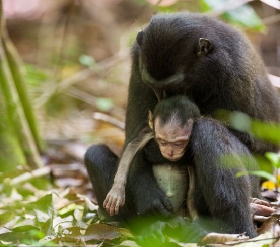 Cái kết bất ngờ đằng sau bức ảnh khỉ mẹ ôm xác con gào khóc - Ảnh 2.