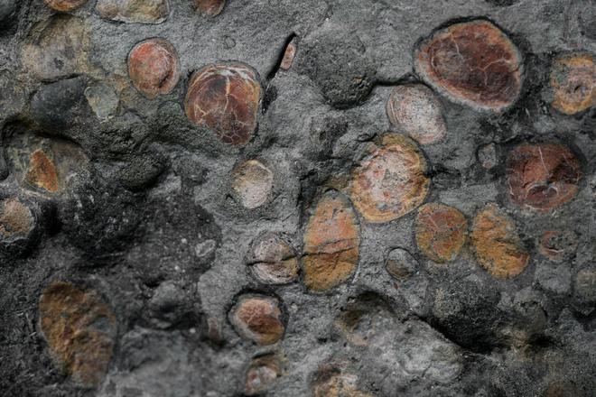 Phát hiện một hóa thạch khủng long được bảo quản đặc biệt tốt ở Alberta, trông giống hệt như đang còn sống - Ảnh 6.