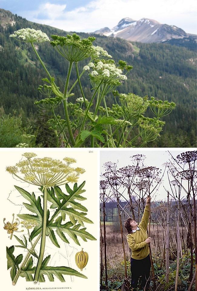 Đừng dại động vào những loài cây này vì chúng đẹp nhưng độc không tưởng - Ảnh 6.