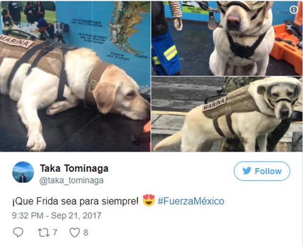 Cô chó được Tổng thống Mexico vinh danh sau khi cứu sống 52 người trong trận động đất khủng khiếp - Ảnh 6.