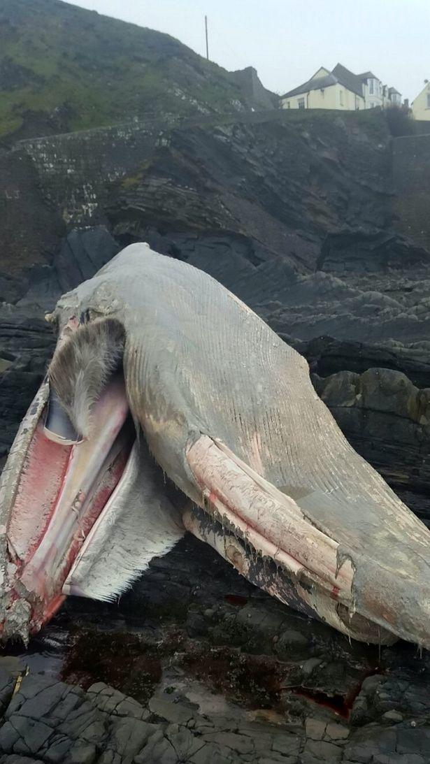 Những sinh vật bí ẩn to như quái vật thời tiền sử dạt vào bờ biển - Ảnh 5.