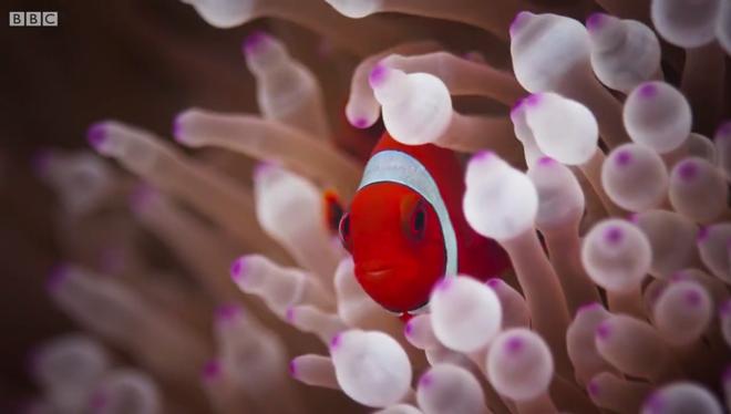 Xuống lòng đại dương sâu thẳm khám phá những sinh vật kỳ lạ như ở ngoài hành tinh - Ảnh 6.