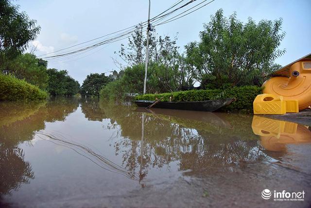 Người trồng quất méo mặt vì nước sông Hồng dâng cao - Ảnh 6.