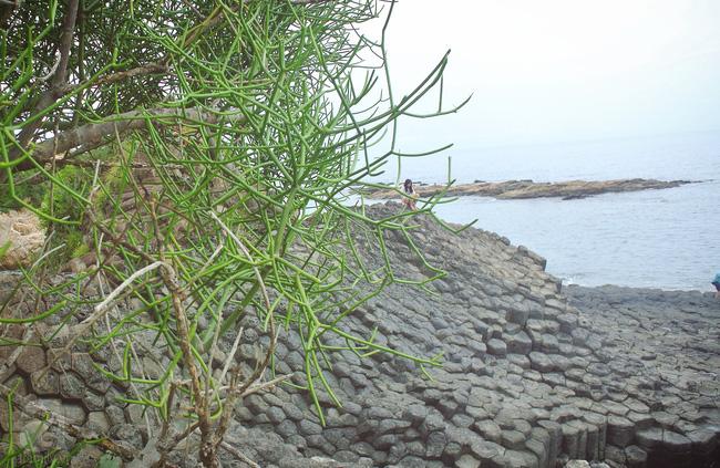 Thăm Ghềnh Đá Đĩa, thưởng thức hải sản đầm Ô Loan - 2 trải nghiệm nhất định phải làm khi ghé Phú Yên - Ảnh 7.