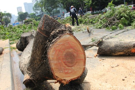 Bắt đầu đốn hạ hàng cây xanh trên đường Lê Lợi - Ảnh 6.