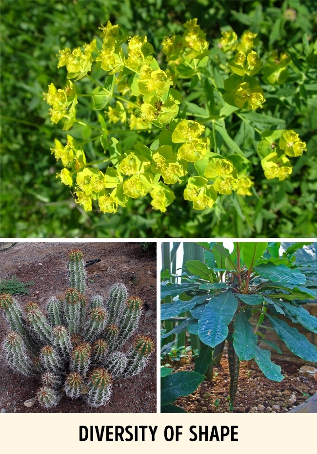 Đừng dại động vào những loài cây này vì chúng đẹp nhưng độc không tưởng - Ảnh 7.