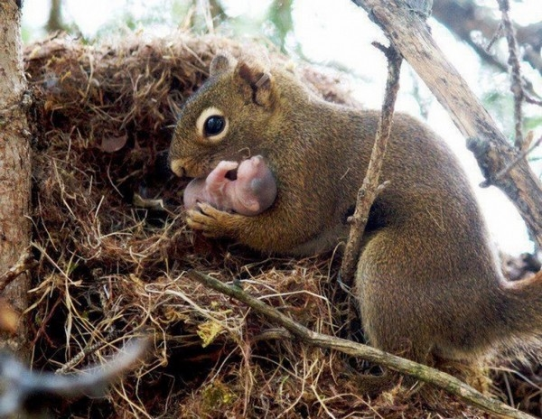 Cái kết bất ngờ đằng sau bức ảnh khỉ mẹ ôm xác con gào khóc - Ảnh 3.