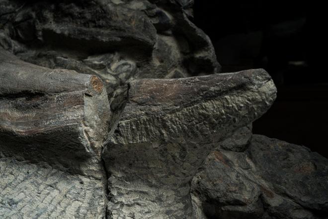 Phát hiện một hóa thạch khủng long được bảo quản đặc biệt tốt ở Alberta, trông giống hệt như đang còn sống - Ảnh 8.