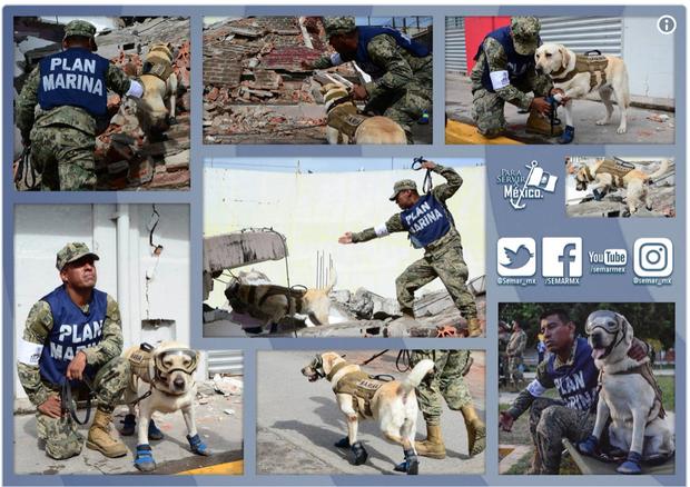 Cô chó được Tổng thống Mexico vinh danh sau khi cứu sống 52 người trong trận động đất khủng khiếp - Ảnh 8.