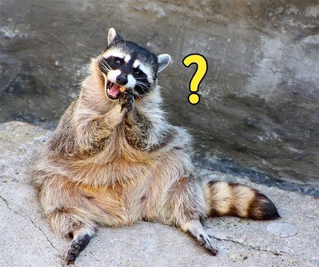 Những hiện tượng quen thuộc ai cũng nhìn thấy nhưng lại lười hỏi Google xem tại sao - Ảnh 8.