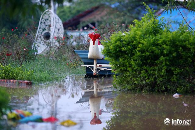 Người trồng quất méo mặt vì nước sông Hồng dâng cao - Ảnh 8.