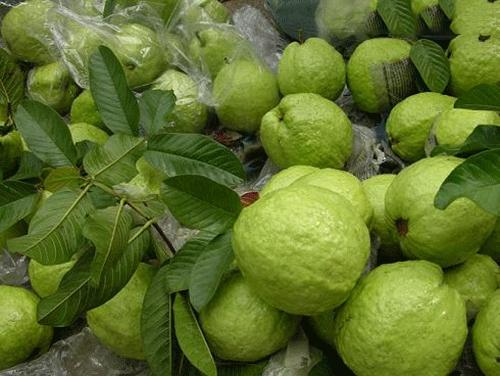 9 loại cây giải độc khi bị rắn cắn, côn trùng đốt, ngộ độc thực phẩm… - Ảnh 6.