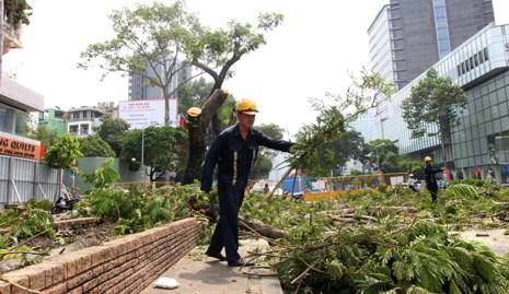 Bắt đầu đốn hạ hàng cây xanh trên đường Lê Lợi - Ảnh 8.