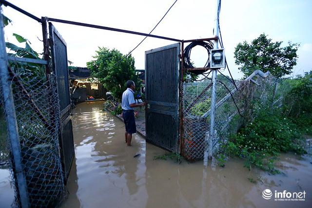 Người trồng quất méo mặt vì nước sông Hồng dâng cao - Ảnh 9.