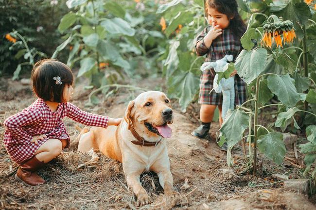 Khuôn mặt sợ chó siêu đáng yêu của cô bé má phính Hà Nội ăn đứt Vô Diện lạnh lùng - Ảnh 10.