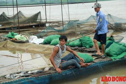 Thủy điện Hòa Bình xả lũ liên tiếp, cá lồng chết như ngả rạ - Ảnh 11.