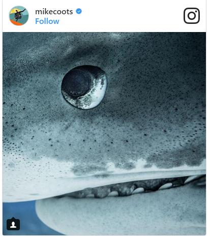 Đây là cách 1 người đối xử với loài cá mập sau khi bị chính chúng... cắn đứt chân - Ảnh 3.