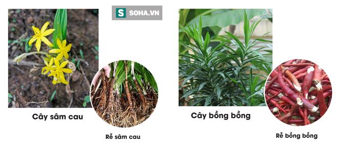 Loại thảo dược tăng cường sinh lý có ở Việt Nam:  Ai uống vào cũng đòi về thăm vợ - Ảnh 5.